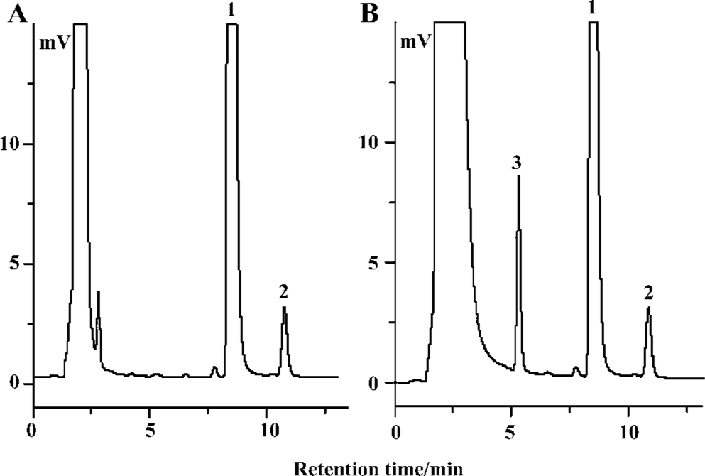Biosynthesis of imipramine glucuronide and characterization of