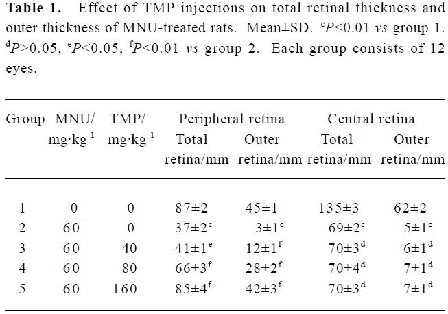 Tetramethylpyrazine protected photoreceptor cells of rats by